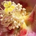 花の中に小さい花と魚卵。