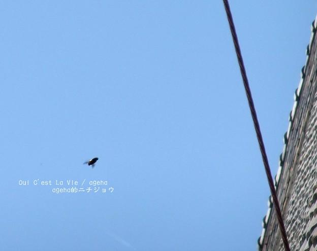 クマンバチも飛来。(富岡製糸場 世界遺産)