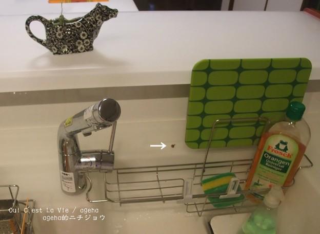 Photos: キッチンに