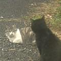 写真: 猫にらみ合い?