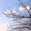 陽を浴びて暖かい穏やかな日に・・・