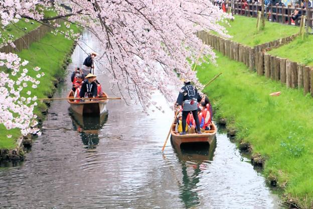春の舟遊-2