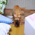 写真: 2010年7月5日のボクチン(6歳)