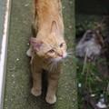 Photos: 2009年7月12日のボクチン(5歳)