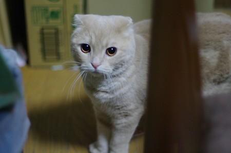 2014年7月18日のスコちゃん(1歳半)
