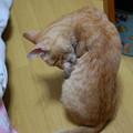 Photos: 2010年8月6日のボクチン(6歳)