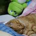 写真: 2011年8月17日のボクチン(7歳)
