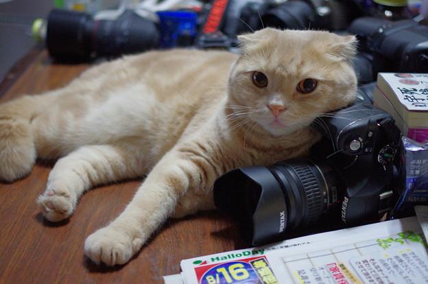 写真: 2014年8月17日のスコちゃん(1歳半)