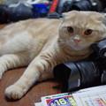 Photos: 2014年8月17日のスコちゃん(1歳半)