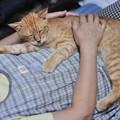 写真: 2009年9月10日の茶トラのボクチン(5歳)