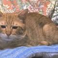 写真: 2008年9月20日のボクチン(4歳)