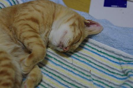 2009年9月24日のボクチン(5歳)