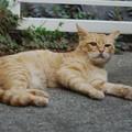 写真: 2009年9月26日の茶トラのボクちん(5歳)