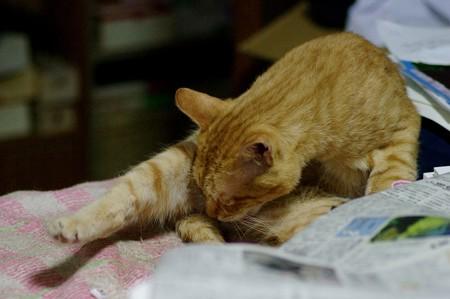 2009年10月20日の茶トラのボクちん(5歳)