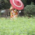 Photos: 秋の花嫁