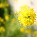 Photos: 住宅街にも春!