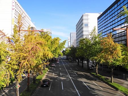 桜通りの銀杏並木