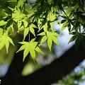 緑のイロハ