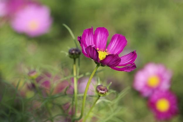初めての花撮り(4)