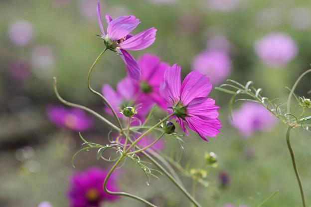 初めての花撮り(5)