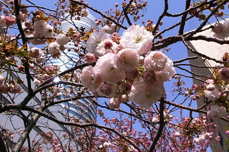 桜枝と筒景