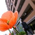 Photos: 橙の花影
