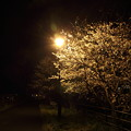 夜桜・・高校グランド横
