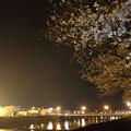 夜桜・・水俣川潮止め付近