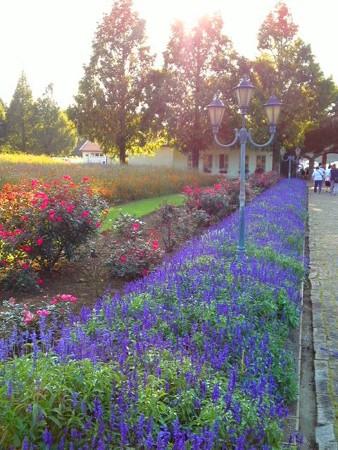 ポティロンの森 夕景の花壇