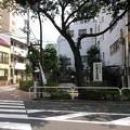 Photos: 近藤勇墓所