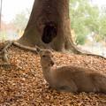 Photos: A Deer