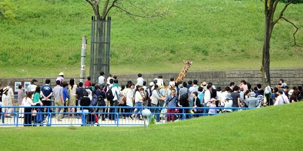 キリンを見る人達