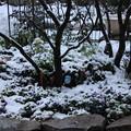 写真: 楽しかった庭作り