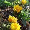 写真: 春がまた一歩近づく