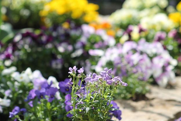 優しい気持ちになれる花壇