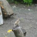 Photos: 庭のスズメ