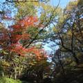 写真: 20131120東山動植物園?