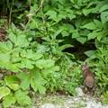 Photos: 野生の猿とも出会ったけど、花を見つめる野うさぎとも出会った…