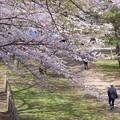 Photos: 休日の散歩道