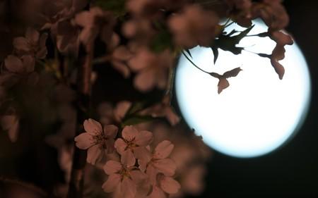 京都府立植物園・ライトアップ33