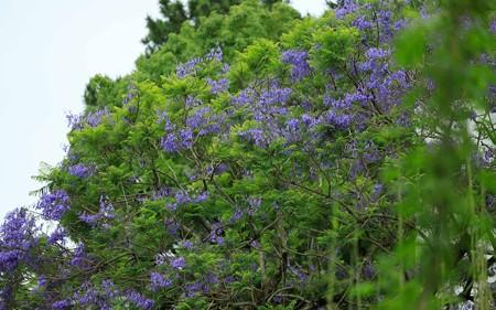 青島亜熱帯植物園21