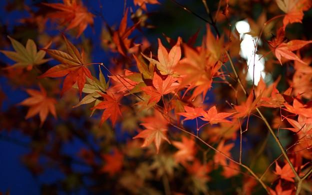 鍬山神社・ライトアップ11