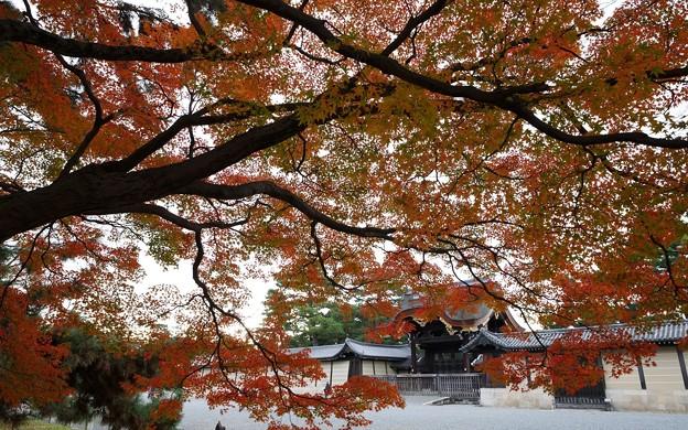 京都御苑47