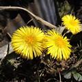 春が来た…3