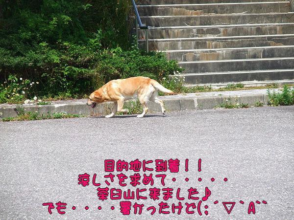 s-2008_0727myu0007