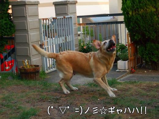 s-2008_0730myu0044