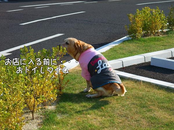 s-2008_0813myu0081