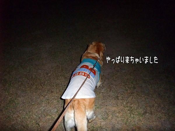 s-2008_0816myu0019
