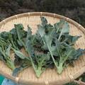 Photos: 収穫野菜8