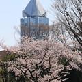 Photos: とんがり屋根と桜